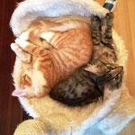 Tomcat 5 Monate alt