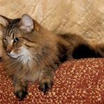 Peppone 5 Jahre und 10 Monate alt