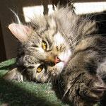 Cosmo 2 Jahre und 3 Monate  alt