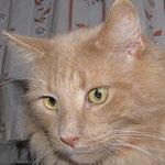 Pierroth 8 Jahre und 4 Monate  alt