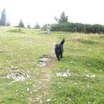 Wanderung auf der Rax
