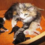 Olympia  3 Jahre und 2 Monate alt mit ihren Y-Babies 2 Wochen alt