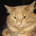 Pierroth 2 Jahre und 3 Monate alt