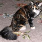 Bellaluna 1 Jahr alt