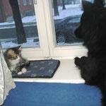 Mit Katzenbaby Camillo