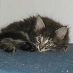 Barney 8 Wochen alt