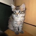 Penelope 6 Wochen alt