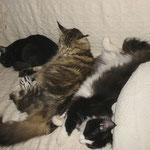 Daisy 2 Jahre alt mit Norwegerchen Bonnie und Belus 5 Monate alt