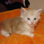 Wallace 4 Wochen alt