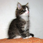 Zeus 10 Wochen alt