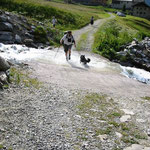 1 Jahr und 8 Monate alt beim Eurasiertreffen in Osttirol