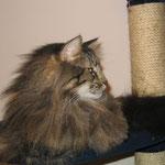 Cosmo 3 Jahre und 11 Monate  alt