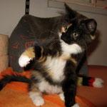 Lucy 10 Wochen alt