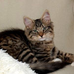 Caruso 3,5 Monate alt
