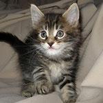 Giacomo 6 Wochen alt
