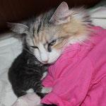 Olympia  5 Jahre alt nach Kastration mit Töchterchen Diana 4 Tage alt