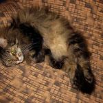 Cosmo 7 Jahre und 10 Monate  alt