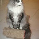Osiris 19 Monate alt