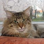 Peppone 2 Jahre alt