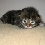 Delilah 2 Wochen alt