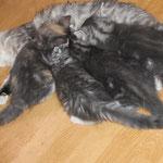 Helena und Geschwister 9 Wochen alt mit Mama Diana