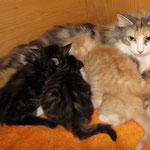Olympia  3 Jahre und 5 Monate alt mit ihren Y-Babes 4 Wochen alt