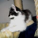 Calypso 10 Wochen alt