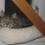 Cosmo 3 Jahre und 10 Monate  alt