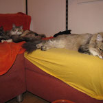 Frøya3 Jahre und 4 Monate alt mit Amelie und Elida