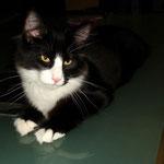 Orpheus 5 Monate alt
