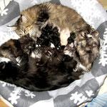 Dime 3 Jahre und 10 Monate alt mit ihren F-Babies 4 Wochen und Coonie Daisy mit ihren 2 Tage alten Babies