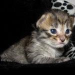 Penelope 2 Wochen alt