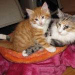 Olympia  2 Jahre und 1 Monate alt  mit Tomcat 9 Wochen alt