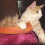 Tristan 21 Wochen alt