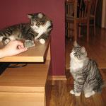 Flint und Figaro 8 Monate alt