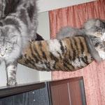 Fabricia 14 Monate alt mit Beryl