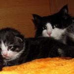 Osiris 2 Wochen alt mit Mama Elida