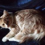 Katana 5 Monate alt
