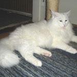 Noshi  11 Monate alt