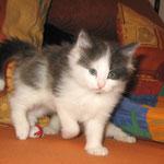 Cheyenne 6 Wochen alt