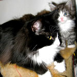 Dime 3 Jahre und 10 Monate alt mit Söhnchen Figaro 38 Tage alt