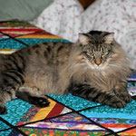 Humphrey 1 Jahr alt
