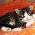 Violetta 4 Wochen alt