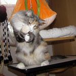 Olympia  3 Jahre und 10 Monate alt