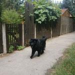 Spaziergang zu Hause