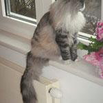 Osiris 13 Monate alt