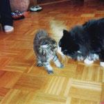 Belus 6 Monate alt mit Katzenbaby