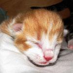 Tomcat 1 Tag alt