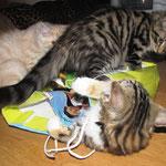 Yasmine 12 Wochen alt mit Yoko