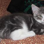 Hieronymus 12 Wochen alt